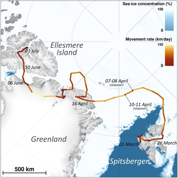 map of route taken by arctic fox